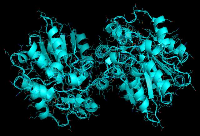 Trójwymiarowy model - enzym